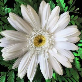 Delicate White Flower - Andrew Soundarajan