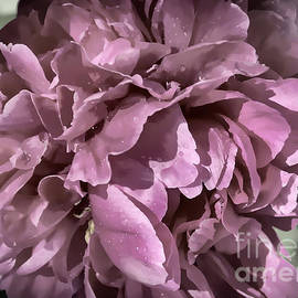 Janice Rae Pariza - Desaturated Wet Pink Peony