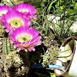 Michael Dillon - Desert Blossom