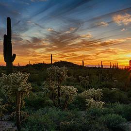 Saija Lehtonen - Desert Evening Light