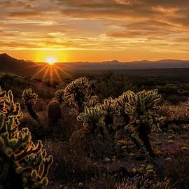 Saija Lehtonen - Desert Gold at Sunset