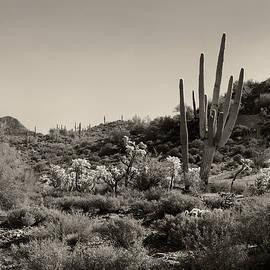 Gordon Beck - Desert Morning