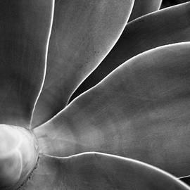 S R Shilling - Desert Plant #3 - Agave