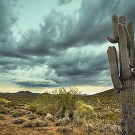 Phil Rispin - Desert Rain