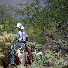 Deb Halloran - Desert Rider