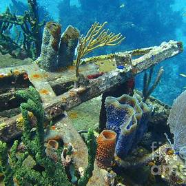 Detail of Shipwreck Encrusted with Beautiful Variety of Coral