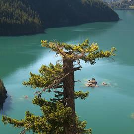 Bob Neiman - Diablo Lake Tree 1962