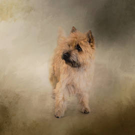 Jai Johnson - Did I Hear You Say WALK - Cairn Terrier