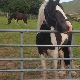 Martine Murphy - Diggle Pony