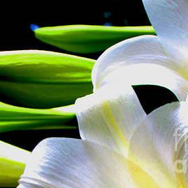 Gardening Perfection - Digi Lily