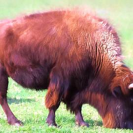 Linda Phelps - Digital Painted Bison