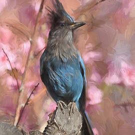Donna Kennedy - Dirty Bird - Stellers Jay