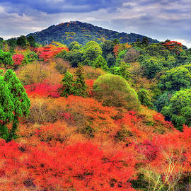 Distant Hill - Midori Chan