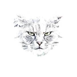Disturbed Cat - Everet Regal