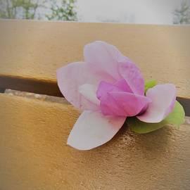 Sonali Gangane - Divine Beauty