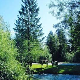 Wealth Of Nature - Do Not Disturb, Simply Joyfully