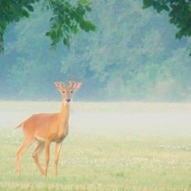 Honey Behrens - Doe in the Morning Mist