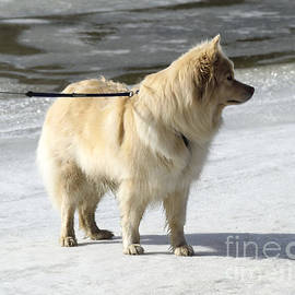 Esko Lindell - Dog on the ice