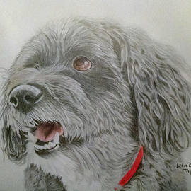 Linda Taylor - Dog Portrait Tibetan Terrier Graphite and Pastel Pencil