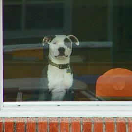 Lenore Senior - Doggie in the Window