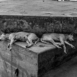 Kobi Amiel - Dogs Of Varanasi