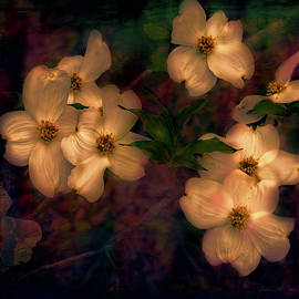 Bellesouth Studio - Dogwood Flowers Alight