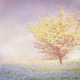 Debra and Dave Vanderlaan - Dogwood in the Mists