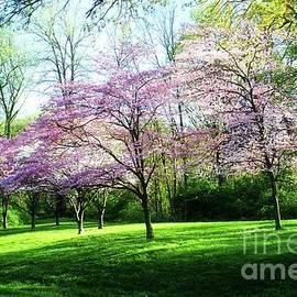 Luther Fine Art - Dogwood Spring