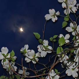 Patricia Adams - Dogwoods and Moon