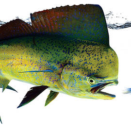 Anders Ovesen - Dolphin-fish
