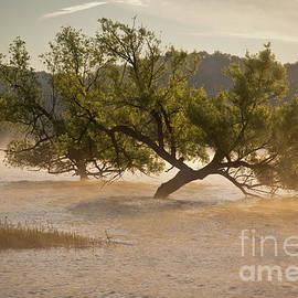 Douglas Stucky - Douglas Lake Tree