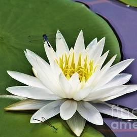 Chuck  Hicks - Dragon Flower