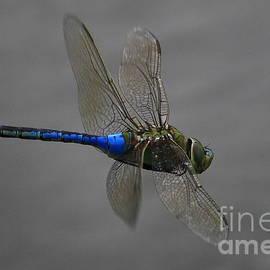 Craig Corwin - Dragonfly Express