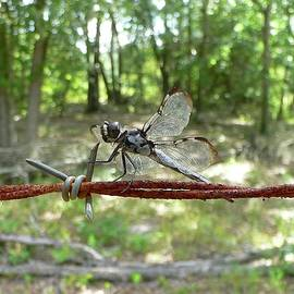 Al Powell Photography USA - Dragonfly on Barbed Wire