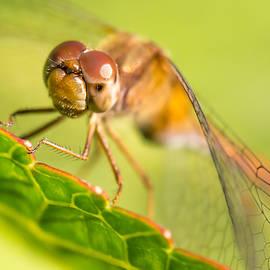 Jim Hughes - Dragonfly on leaf