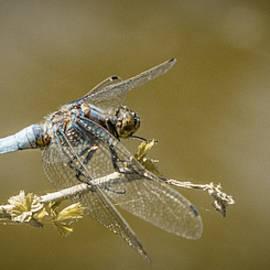 Stwayne Keubrick - Dragonfly on the spot