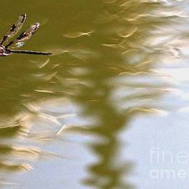 Diann Fisher - Dragonfly Over Troubled Waters