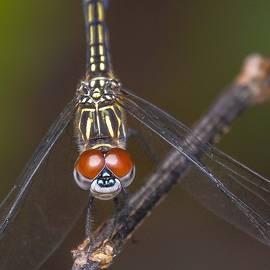 Dick Hudson - Dragonfly Smile