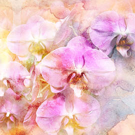 Mother Nature - Dreaming of Orchids