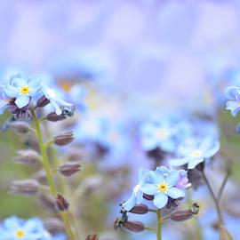 Lena Kouneva - Dreams in Blue