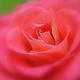 Bonita Brandt - Dreams of Roses
