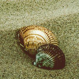 Melissa Fague - Dreamy Beach Sea Shells Colorized Nature Photograph