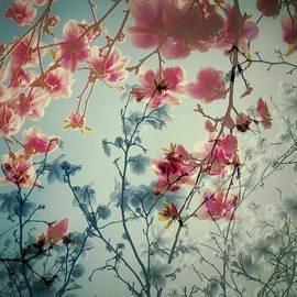 Patricia Strand - Dreamy Blossoms