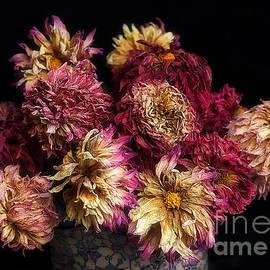 Ann Jacobson - Dried Dahlias from the Garden