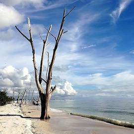 Janet King - Driftwood at Lovers Key State Park