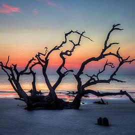 Reid Callaway - Driftwood Beach Sunrise Jekyll Island Georgia