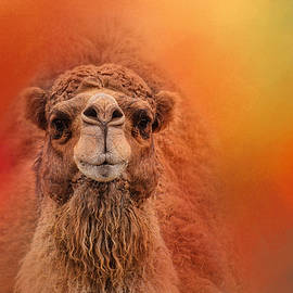 Jai Johnson - Dromedary Camel