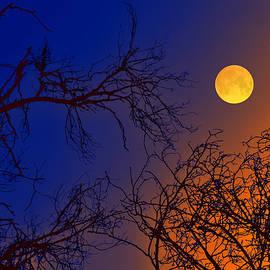 Bliss Of Art - Dual Sky