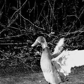 John Straton - Duck by Pond  v2