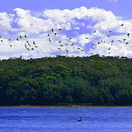 Miroslava Jurcik - Duck Flying Over The Lake